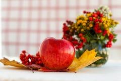 Manzanas maduras rojas con las hojas de otoño y el serbal Imagenes de archivo