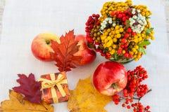 Manzanas maduras rojas con las hojas de otoño y el serbal Imagen de archivo libre de regalías