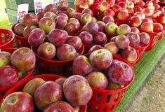 Manzanas orgánicas Fotos de archivo libres de regalías