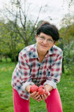 Manzanas orgánicas Fotografía de archivo libre de regalías
