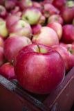 Manzanas orgánicas de la gala Imágenes de archivo libres de regalías
