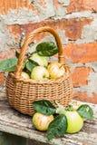 Manzanas orgánicas en cesta en hierba del verano Fresco en naturaleza Fotografía de archivo