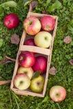 Manzanas orgánicas en embalaje Imagen de archivo libre de regalías