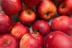 Manzanas orgánicas rojas imperfectas Fotografía de archivo
