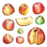 Manzanas pintadas con las acuarelas en el Libro Blanco Foto de archivo libre de regalías