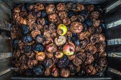 Manzanas putrefactas imagenes de archivo