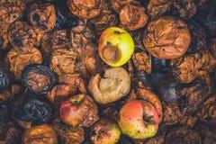 Manzanas putrefactas fotos de archivo