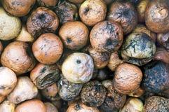 Manzanas putrefactas Imagen de archivo