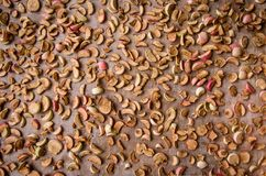 Manzanas que consiguen secadas imagen de archivo libre de regalías
