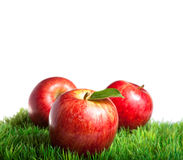 Manzanas reales de la gala Fotografía de archivo