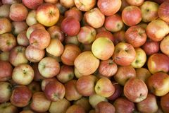 Manzanas reales de la gala Imagen de archivo