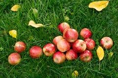 Manzanas rojas Fotos de archivo libres de regalías