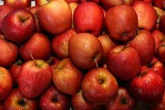 Manzanas rojas Foto de archivo