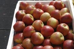 Manzanas rojas amarillas en el rectángulo blanco Imagen de archivo libre de regalías
