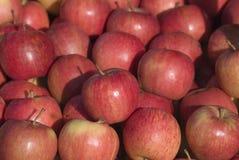 Manzanas rojas atractivas foto de archivo libre de regalías