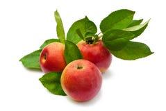 Manzanas rojas con las hojas verdes Fotografía de archivo
