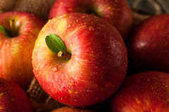 Manzanas rojas crudas de Fuji Foto de archivo