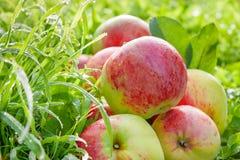 Manzanas rojas de la fruta en una hierba verde Imagen de archivo