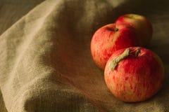 Manzanas rojas del árbol en el paño de lino Imágenes de archivo libres de regalías