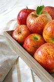 Manzanas rojas del otoño en la bandeja gris Fotos de archivo libres de regalías