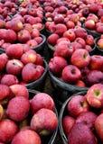 Manzanas rojas en celemines Fotos de archivo libres de regalías