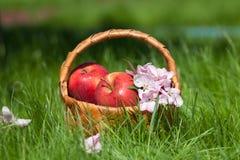 Manzanas rojas en cesta Jardín imagen de archivo libre de regalías