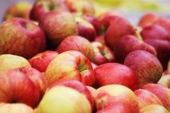 Manzanas rojas en el mercado de los granjeros Fotos de archivo libres de regalías