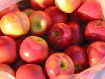 Manzanas rojas en el mercado del granjero imágenes de archivo libres de regalías