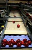 Manzanas rojas en la bandeja Fotografía de archivo libre de regalías