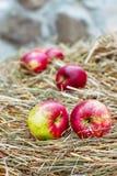 Manzanas rojas en la nieve Fotos de archivo