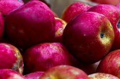 Manzanas rojas en un rectángulo de madera Imagen de archivo libre de regalías