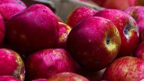 Manzanas rojas en un rectángulo de madera Foto de archivo libre de regalías