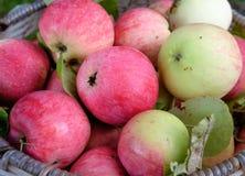 Manzanas rojas frescas Fotos de archivo