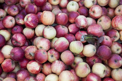 Manzanas rojas frescas en el mercado Muchas manzanas un gran contexto para una tienda de la fruta Imagenes de archivo
