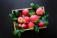 Manzanas rojas frescas en la caja de madera en fondo negro imagenes de archivo