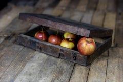 Manzanas rojas grandes en una caja de madera oscura Cajón de madera y manzanas encendido Imagen de archivo