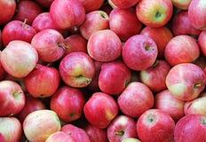 Manzanas rojas listas para ser comido Imagenes de archivo