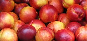 Manzanas rojas maduras Fotografía de archivo