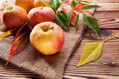 Manzanas rojas maduras Imagen de archivo