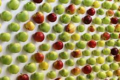 Manzanas rojas, verdes y amarillas en el escritorio blanco Fotografía de archivo libre de regalías
