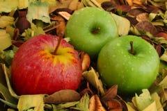 Manzanas rojas y verdes Imágenes de archivo libres de regalías