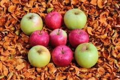 Manzanas rojas y verdes en el fondo de manzanas secadas Imagen de archivo