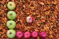 Manzanas rojas y verdes en el fondo de manzanas secadas Foto de archivo