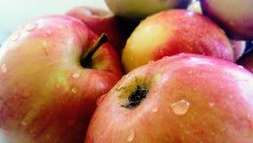 Manzanas rojo-verdes orgánicas Fotos de archivo libres de regalías