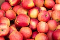 Manzanas rosadas Imagen de archivo libre de regalías