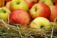 Manzanas salvadas en heno Imagenes de archivo