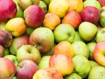 Manzanas salvajes Fotografía de archivo