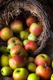 Manzanas salvajes en cesta Fotos de archivo