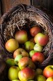 Manzanas salvajes en cesta Fotografía de archivo libre de regalías