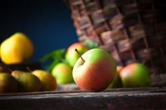 Manzanas salvajes en cesta Foto de archivo libre de regalías